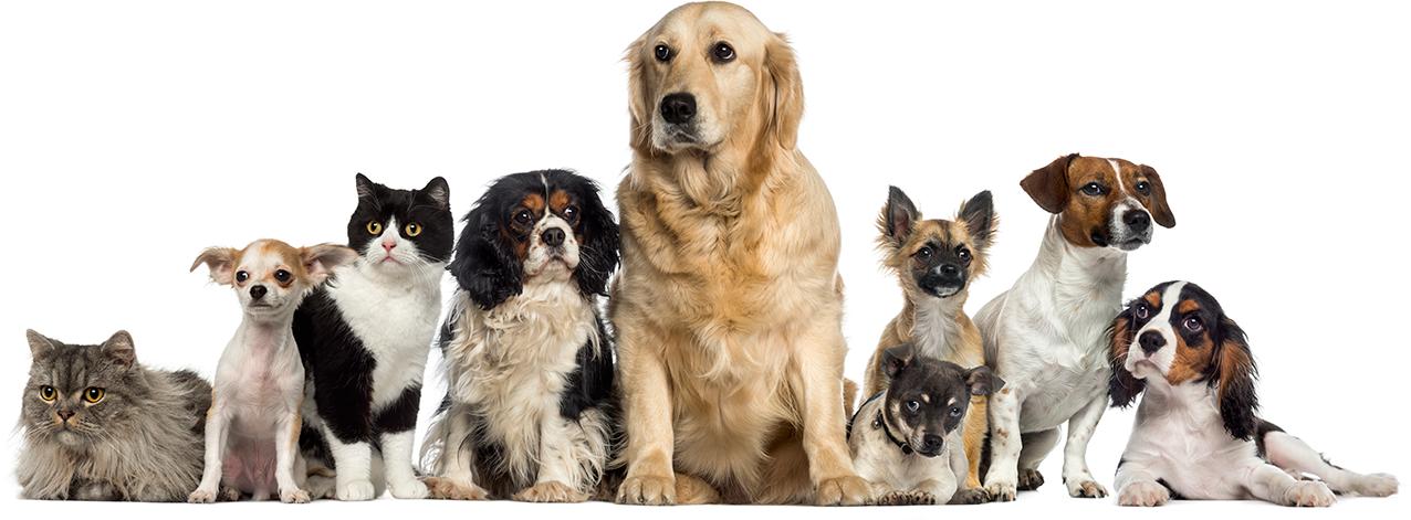 dog kennels, dog kenneling whakatane, dog kennels bay of plenty, dog kenneling, doggy daycare