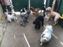 menagerie, Boarding Kennels & Cattery, kennels, cattery, dog daycare