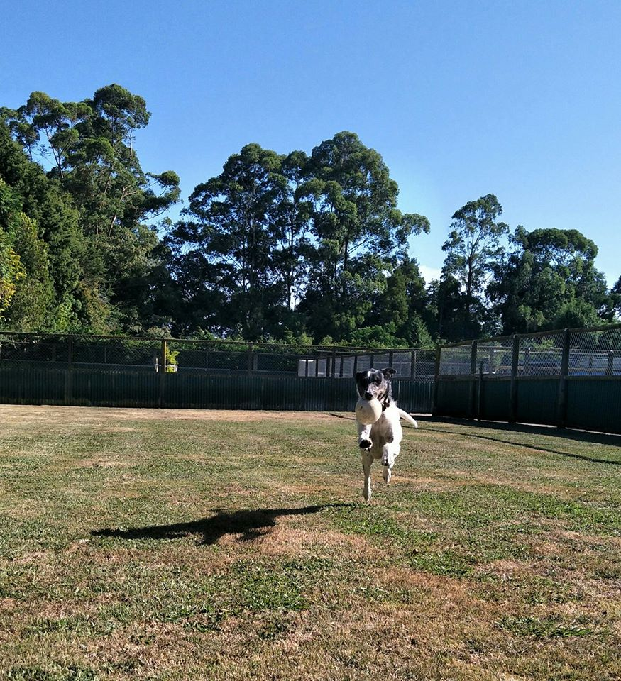 Managerie Boarding Kennels and Cattery Whakatane Bay of Plenty NZ (42)